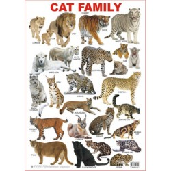 Educational Charts Series: Cat Family